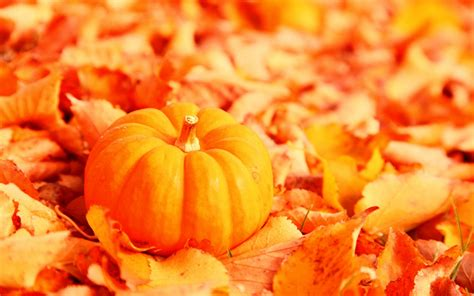 little pumpkin with fallen orange autumn leaves 1280x800