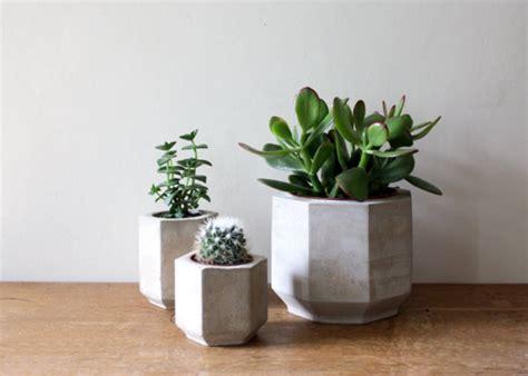 large octagonal concrete planter cactus or succulent plant