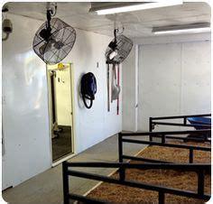 cattle cooler room barn cattle