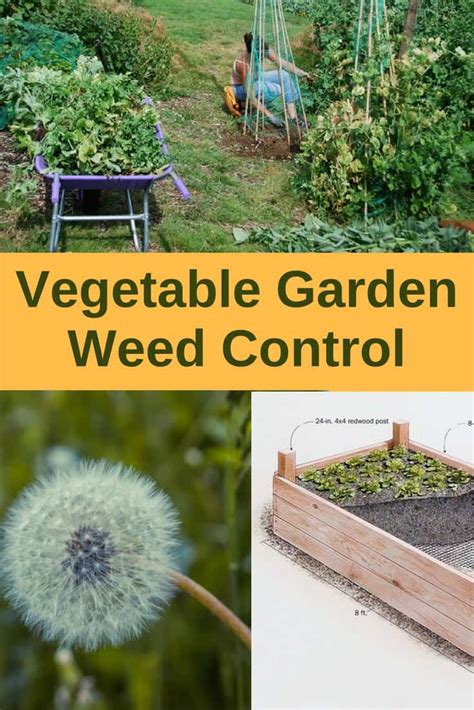 Vegetable Garden Weed Control Grass Killer For Vegetable Gardens