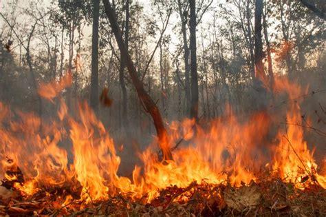 imagenes de desastres naturales y antropicos 191 conoces todos los tipos de desastres naturales batanga