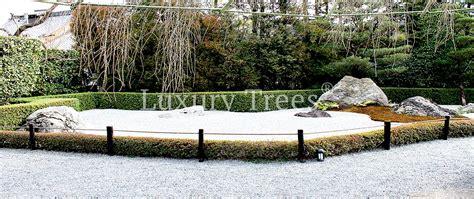 Zen Garten Deko by Mini Bonsai Im Dunkelgr 252 Nen Keramikt 246 Pfchen F 252 R Zen Garten