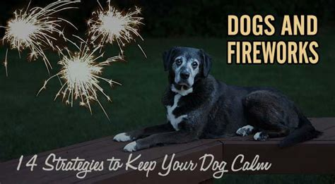 dogs and fireworks dogs and fireworks 14 strategies to keep your calm