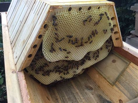 top bar bee keeping 17 best ideas about top bar hive on pinterest beekeeping