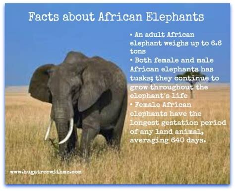 8 Facts On Elephants by Facts About Elephants Elephants