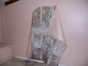 What Does Black Mold Look Like What Does It Look Like Find Out Here