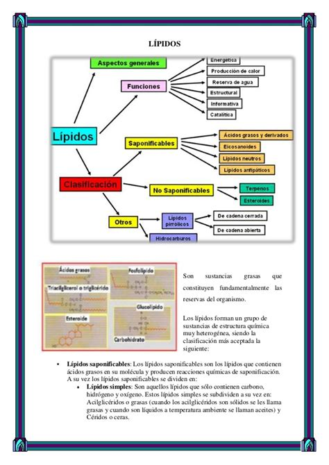 proteinas y lipidos andrescordoba44 carbohidratos lipidos y proteinas