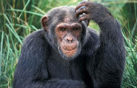 sedere brutto scienza shock quot la specie umana 232 nata dall unione di un