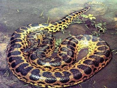Parfum Roda Hijau ular terbesar di dunia