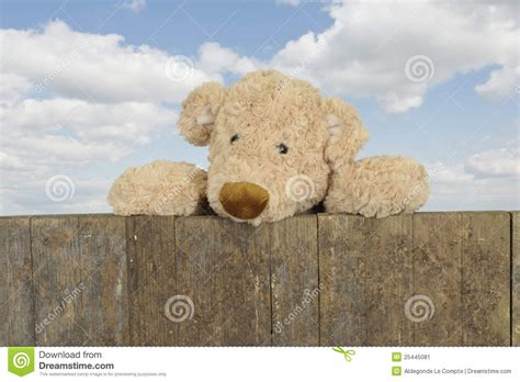 teddy looking teddy looking from above a wooden fence stock image image 25445081