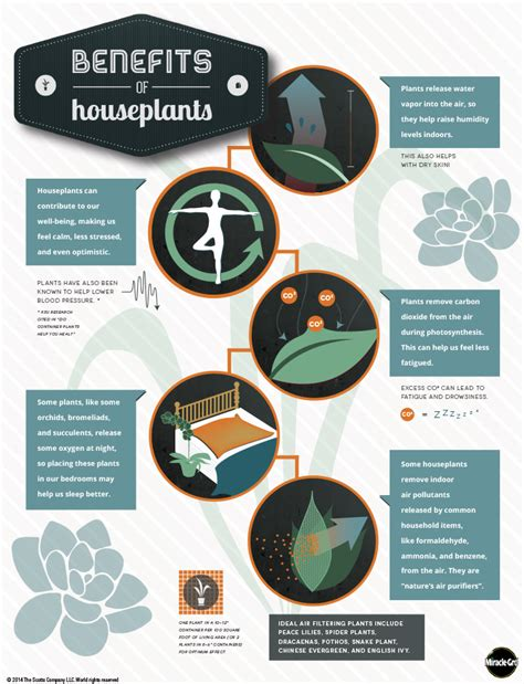 benefits of house plants the benefits of houseplants an infographic indoor