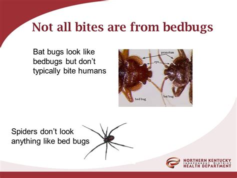 getting bit at night not bed bugs getting bit at night not bed bugs 28 images this