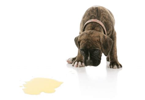 housetraining a puppy housetraining stilwell positively