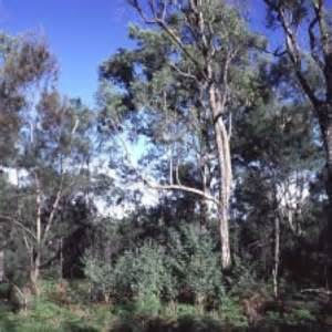 Who Are They Kidding Bulga by Bulga Residents Withdraw Appeal Against Warkworth Mine