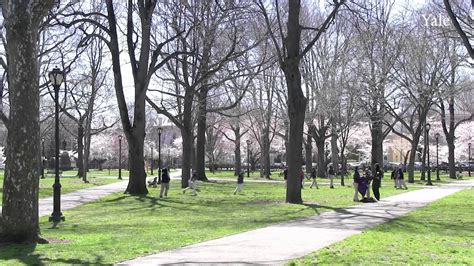 cherry tree investments v landmain 2012 restoring the wooster square cherry trees