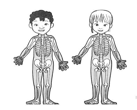 figura corpo umano organi interni pin corpo umano colorare per bambini disegni imagixs