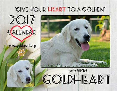 golden retriever rescue lancaster pa golden retriever rescue lancaster pa assistedlivingcares