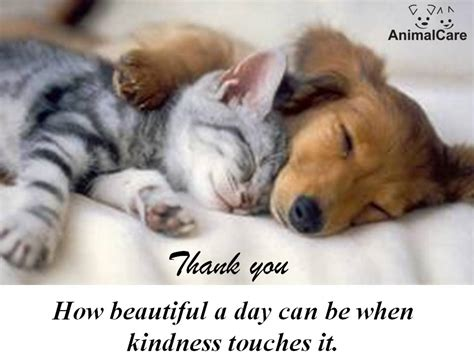 thank you puppy tis time to say thank you again november donors 171 animalcare