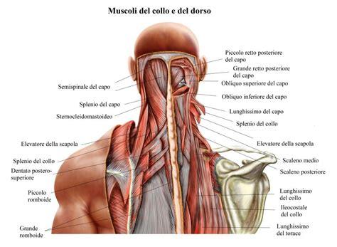 testa anatomia anatomia collo