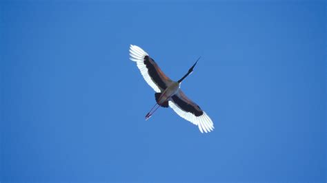 State Birds by Australian Bird Photos Dia S74 28