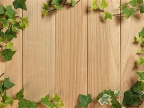 wallpaper abstrak kayu gambar hd latar belakang kayu berdaun hijau hijau gratis