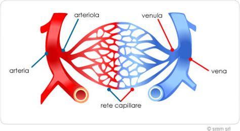letto capillare capillari