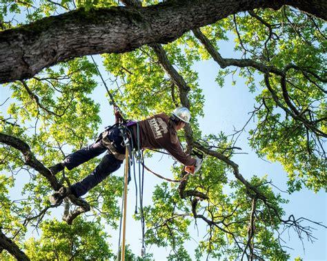 service sacramento tree pruning and shaping 183 sacramento s best tree care arborist