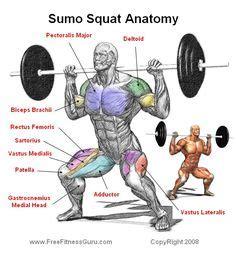 sumo wrestler bench press squat 2 combined bodybuilding anatomy 2 pinterest