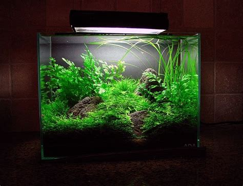 shimmering hills aquascape design aquascape nature
