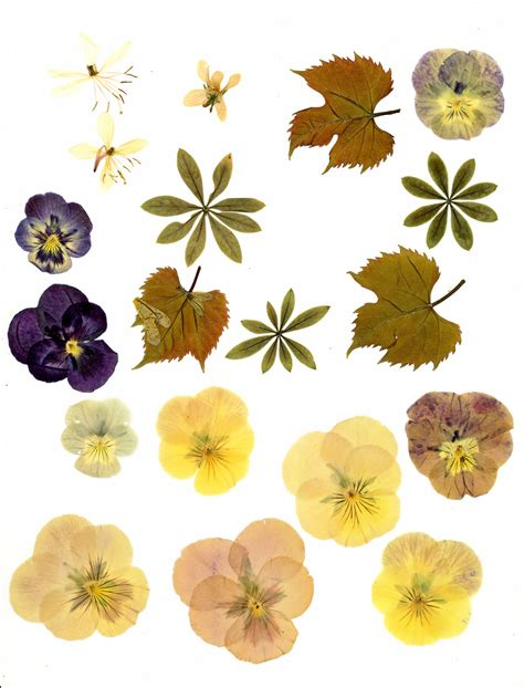 flower pressing instructions pressing instructions beautiful fake flowers