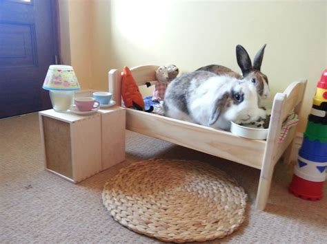 rabbit bed 5 ways to make your new pet feel at home nyoooz