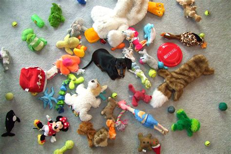 how to keep dog toys from going under the couch my 1st world problems as a celebrity dachshund crusoe