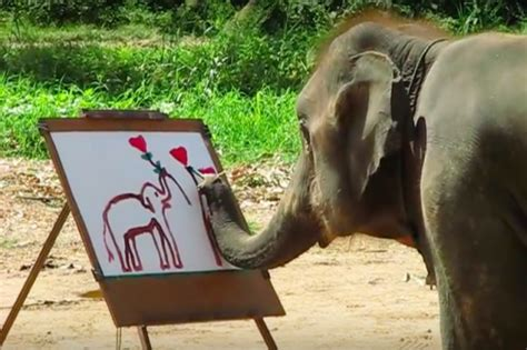 painting elephant picture association part 2 the free