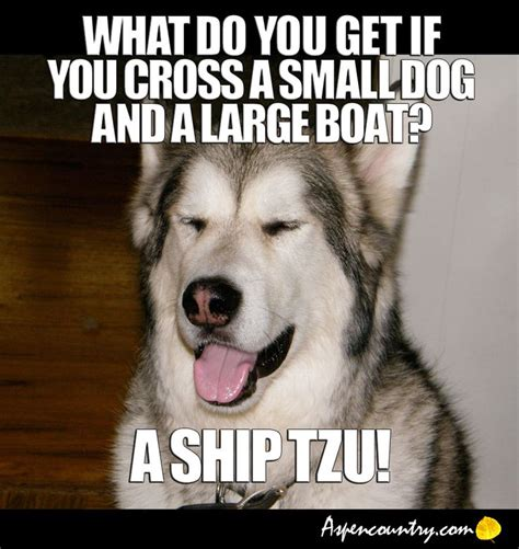 small boat jokes easygoing dog meme riddle q what do you get if you cross