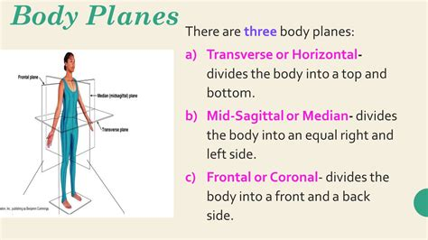 a section that divides the body into left and right holes essentials of human anatomy and physiology ninth