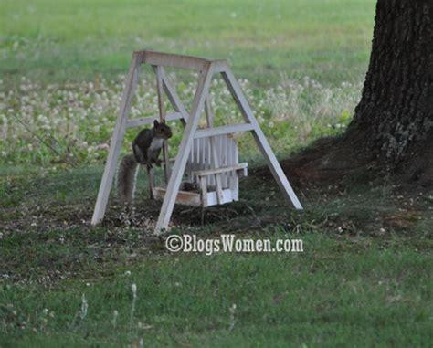 squirrel swing feeding time squirrel swing feeder diy pinterest