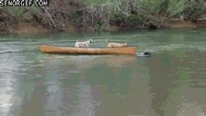 boat dog jokes dog boat gif gif animation animated pictures