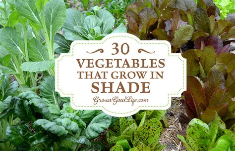 What Garden Vegetables Like Shade 30 Vegetables That Grow In Shade