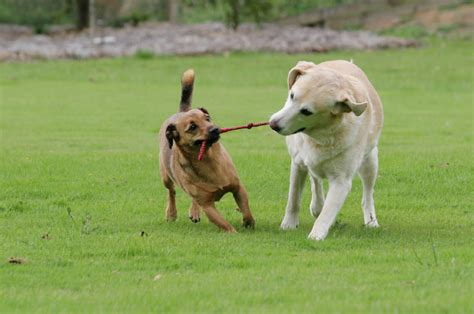 dogs at play dogs all pet news