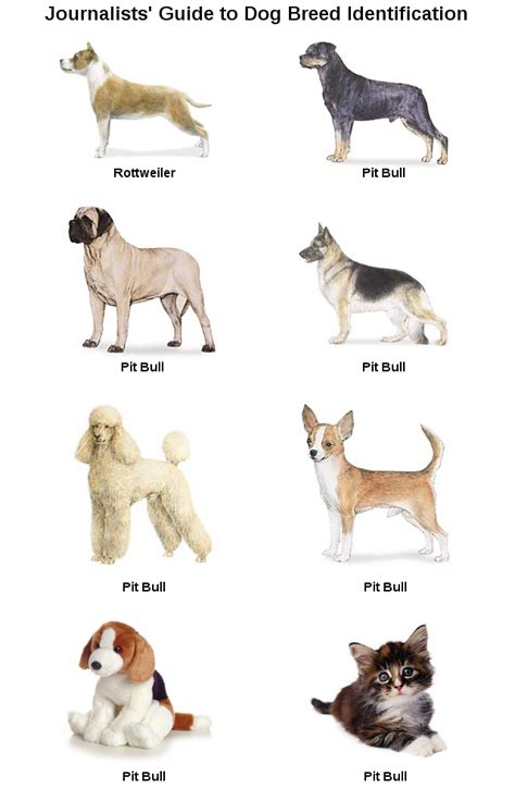 breed identifier breed identification chart breeds picture