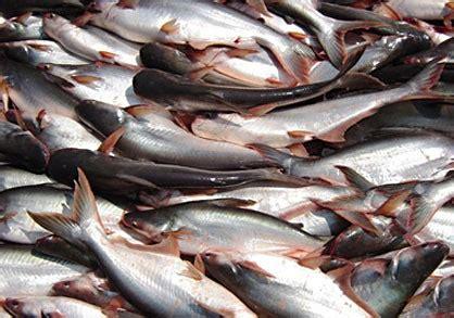 Harga Pakan Ikan Matahari Sakti article pt matahari sakti