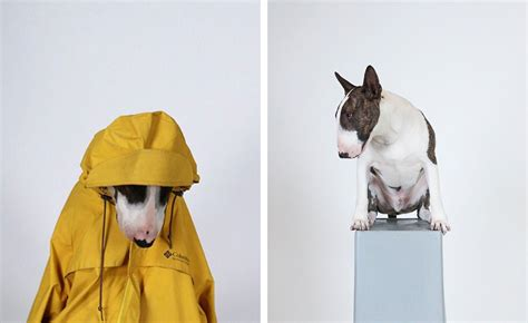doggy style doggy style the most stylish dogs of instagram wallpaper