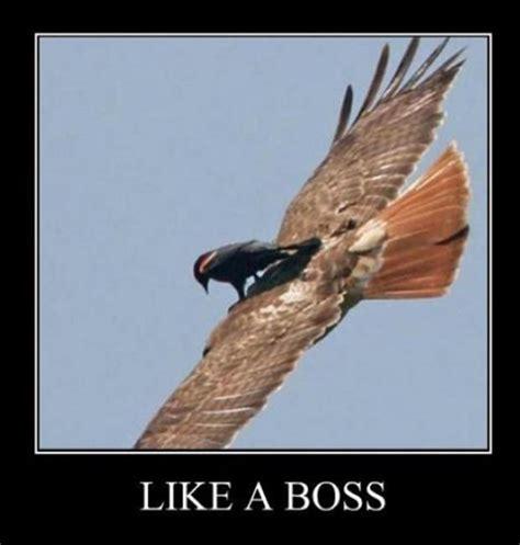 Like A Boss Meme - funny memes like a boss 9 dump a day