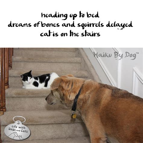 dogs in dreams haiku by dreams with dogs and cats