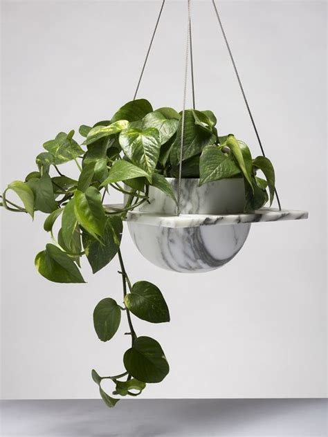 low light hanging plants healthy indoor environment best climates indoors for