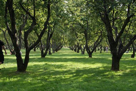 pictures of garden file apple garden in kolomenskoye jpg