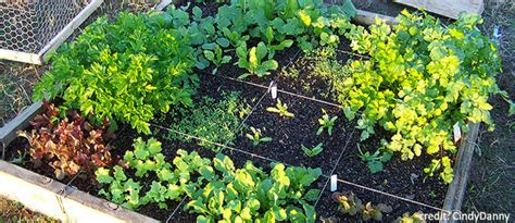 gardening picture eartheasy blogmaking the most of a small space garden