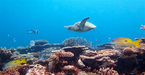 best diving places what are the best diving places on our great barrier reef