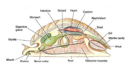 opinions on structures built by animals opinions on mollusca