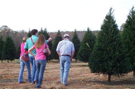 southern christmas tree association alabama louisiana